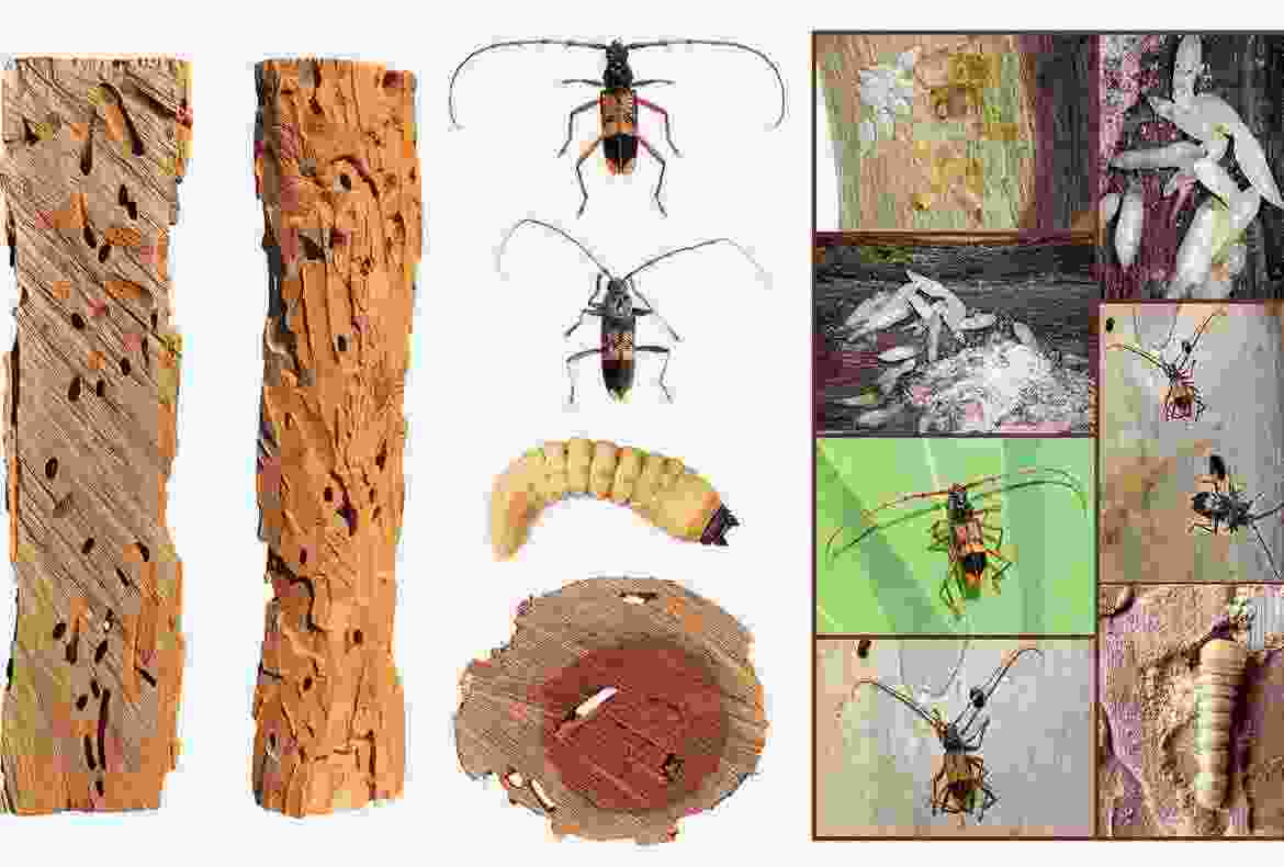 Types of Pests